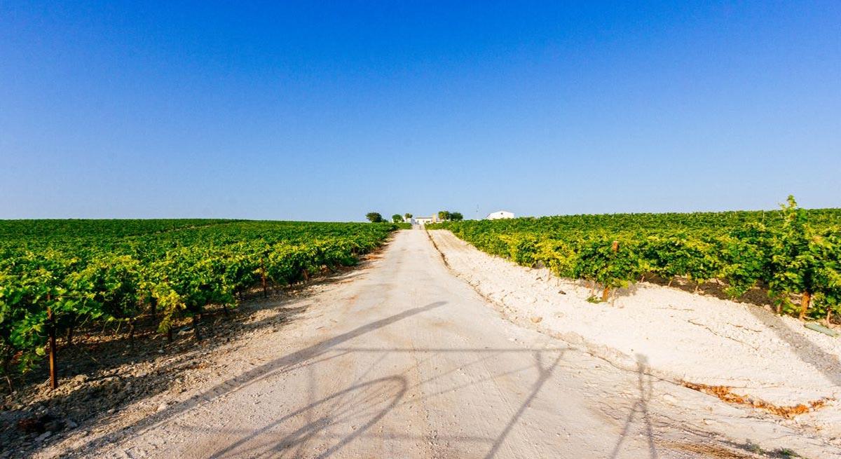 Turismo organiza unavisita guiada gratuitacon cata de vinos ala casa de viñaBalbaina